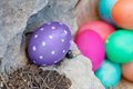 Hiding the first egg placing in a place under a rock for easter hunt Stock Photos