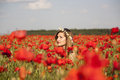 Hiding playing hide and seek in a poppy field Stock Photography