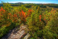 High above the trees in autumn wide angle a view of tree tops a forest during season Stock Images