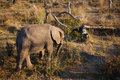 High angle view of baby elephant Stock Photo