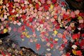 Red and Yellow Autumn Leaves Floating in Water Royalty Free Stock Photo