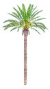 High palm tree isolated