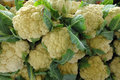 High definition image of cauliflower photographed in on a farm in florida Royalty Free Stock Photography