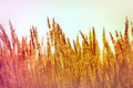 High dry grass Royalty Free Stock Photo