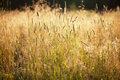 High grass Stock Photography