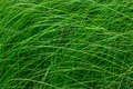 High green grass in a meadow. Close up of fresh grass on the field. Royalty Free Stock Photo