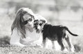 High-key soft dreamy love tenderness woman and pet puppy dog Royalty Free Stock Photo