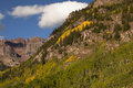 High mountain aspens in autumn Stock Photography