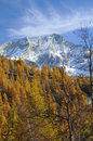 High mountain, cirrus, glaciers and forest Royalty Free Stock Image