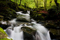 High mountain stream in forest Royalty Free Stock Photos