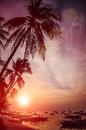 Tropical beach with palm trees during amazing sunset. Nature.