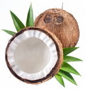 High-quality photos of coconuts. Stock Photo