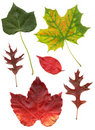 High quality scanned diverse leaves Royalty Free Stock Images