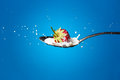 High-speed photo of strawberries falling into milk Royalty Free Stock Photo