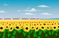 The high-speed train hurtling through a field of sunflowers.