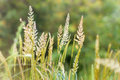 High spring grass Royalty Free Stock Photo