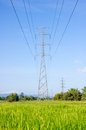 High voltage post high voltage tower on green rice field with sky background Stock Photos