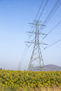 High voltage support of a power line in the field sunflowers Stock Image