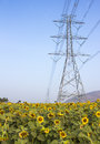 High voltage support of a power line in the field sunflowers Royalty Free Stock Photos