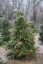 Winter in Missouri 2021 VIII Royalty Free Stock Photo