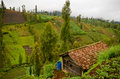 Highland village in java indonesia the of ngadas malang Stock Images