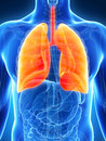 Highlighted male lung Royalty Free Stock Image