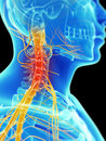 Highlighted neck nerves d rendered illustration of painful Stock Photo
