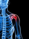 Highlighted shoulder joint Royalty Free Stock Images