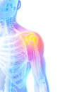 Highlighted shoulder joint d rendered illustration painful Stock Photos