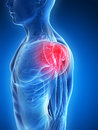 Highlighted shoulder muscles d rendered illustration painful Stock Photo