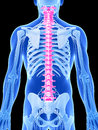 Highlighted spine d rendered illustration human Royalty Free Stock Photography