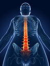 Highlighted spine d rendered medical illustration painful Stock Image