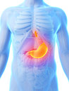 Highlighted stomach d rendered illustration painful Royalty Free Stock Images