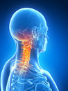 Highlightedskeletal neck d rendered illustration skeletal Stock Photo