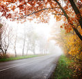 Highway in the autumn forest fog Stock Photo