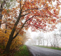 Highway in the autumn forest. Royalty Free Stock Photo