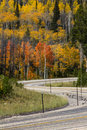Highway in sierra madre mountains wyoming aspen or quaking aspen the leaves appear to quake or move the wind these were the of Stock Photo