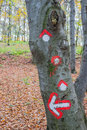 Hike path symbol painted on tree bark Royalty Free Stock Photo