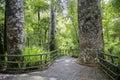 Hike Trail Through Tall New Ze...