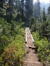 Hiker crossing marshy area on boardwalk near snow lake snoqualmie pass washington Royalty Free Stock Photos