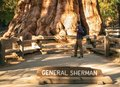 Hiker man near General Sherman Tree - the largest tree on Earth. Traveler male looking at the giant sequoia tree Royalty Free Stock Photo