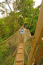Hiker on tree canopy walkway above the rain forest a near napo river in in peru Stock Image
