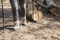 Hiker with trekking boots on the forest trail closeup legs Stock Photography