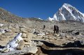 Hikers climbing to kala patthar peak m nepal april on april in gorakshep village everest region this place is Stock Photo