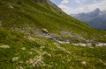 Hiking on the alp flix is moor to about m altitude and a beautiful nature reserve Royalty Free Stock Image