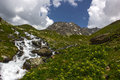 Hiking on the alp flix is moor to about m altitude and a beautiful nature reserve Stock Images