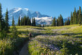 Hiking in the alpine woman meadows mount rainier Stock Image