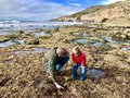Father and son exploring Cabrillo Tide pools San Diego Royalty Free Stock Photo