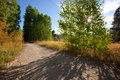 Hiking / biking road through forest and meadows Royalty Free Stock Image