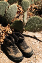 Hiking Boots and Cactus Royalty Free Stock Photo
